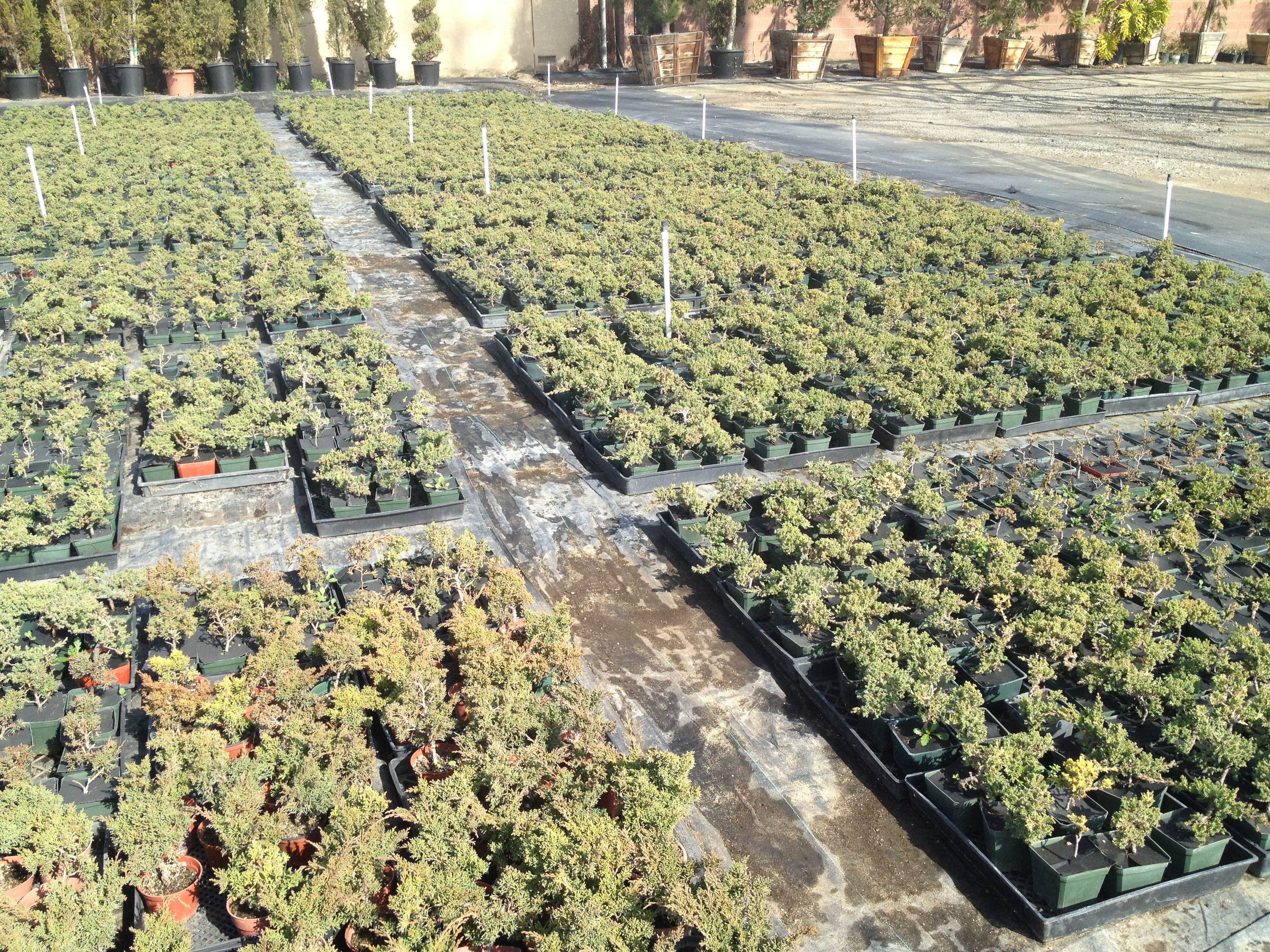 The Bonsai Dilettante Nurseries