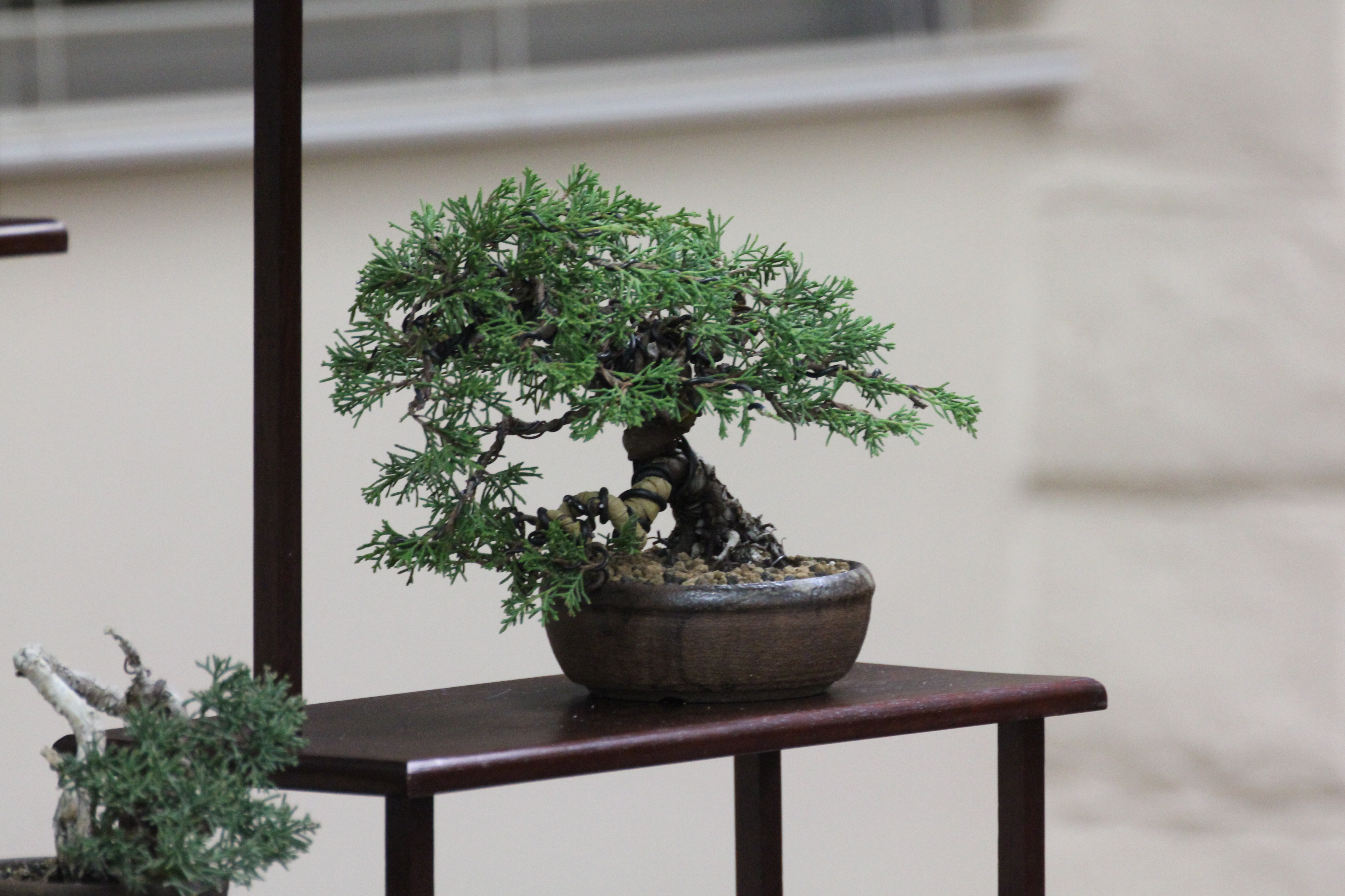 The bonsai dilettante styling img2728 hexwebz Image collections