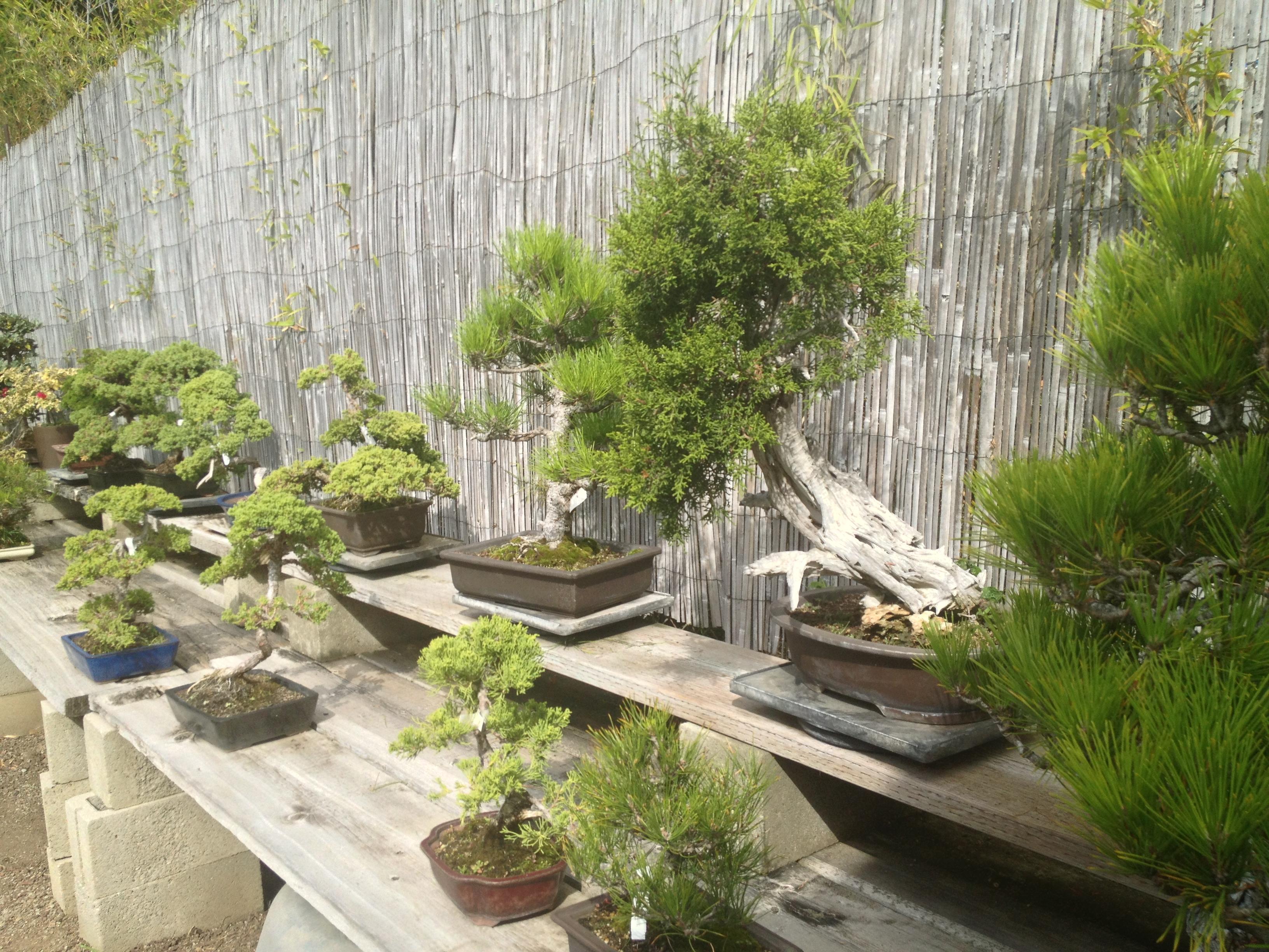 Bonsai Nursery Visits Yamaguchi And Hashimoto The Bonsai Dilettante