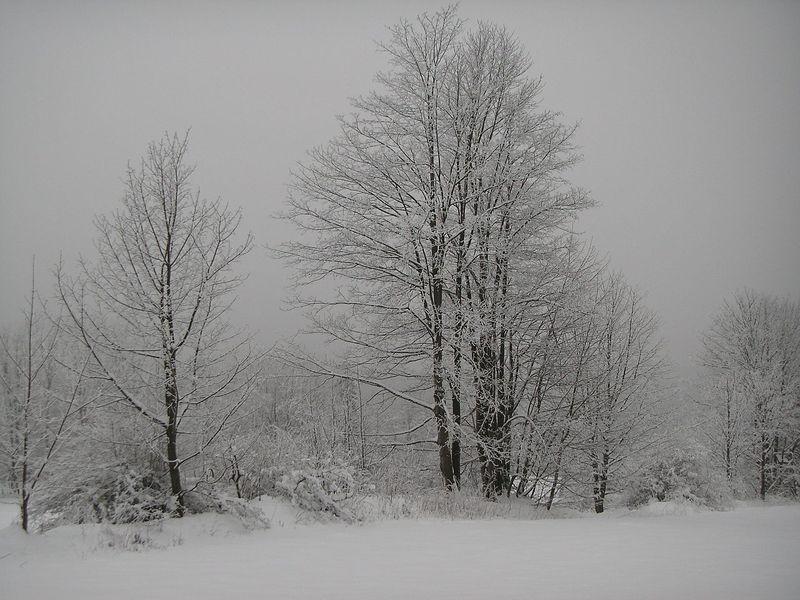 Bäume_im_Winter-
