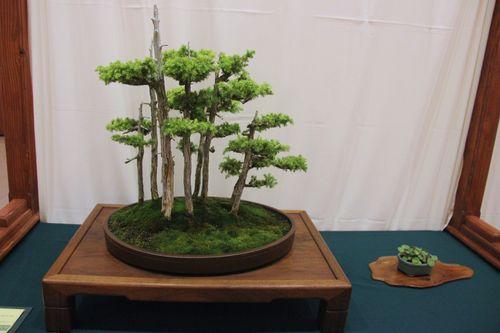 Bill Hutchinson - Foemina Juniper Forest