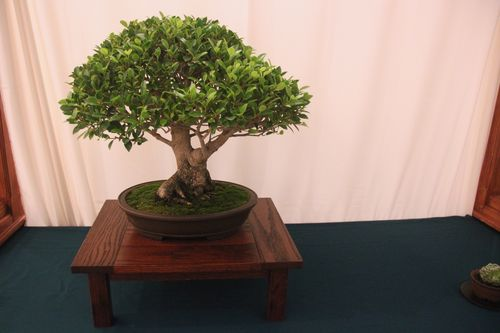 Dave Miles - Ficus