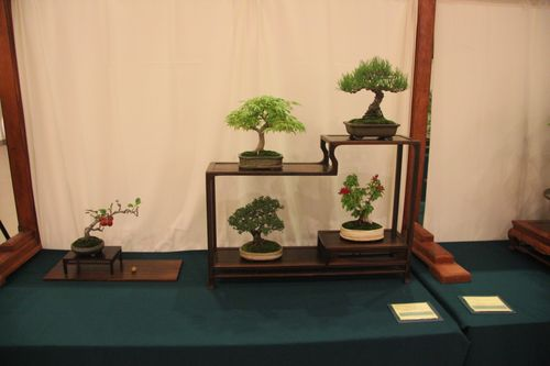 Larry Ragle - Black Pine, Japanese Maple, Bougainvillea, Crabapple, Chinese Elm