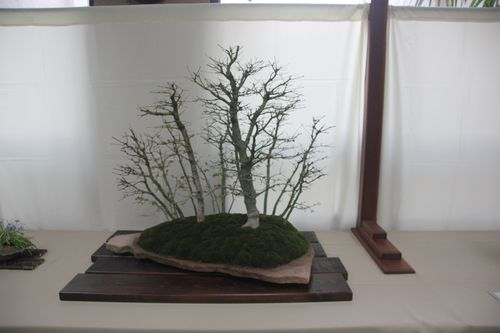 Dick Ryerson - Japanese Maple