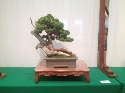 Frank Goya - Shimpaku