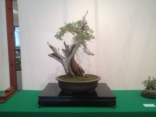 Harry Hirao - California juniper