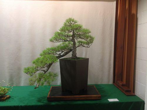 Hiro Maehara - JBP