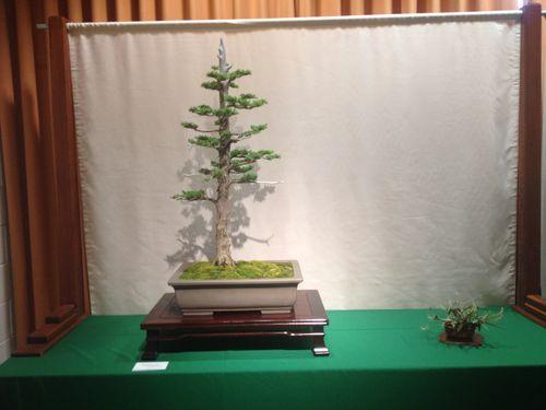 Paul Vasina - Foemina juniper