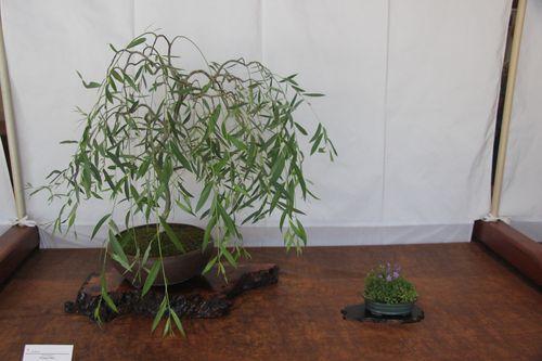 Jim Morris - Weeping Willow