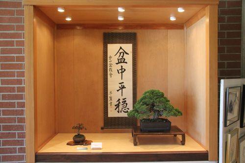 Ted Oka - Kishu Shimpaku Juniper