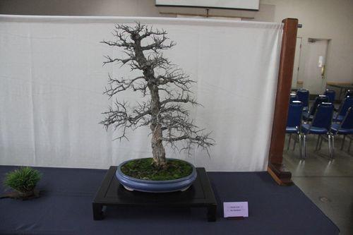 Cedar Elm - Ray Blasingame