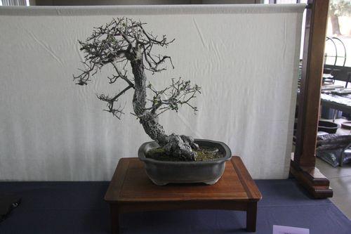 Scrub Oak - Harry Hirao (2)