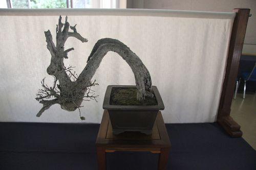 Scrub Oak - Harry Hirao