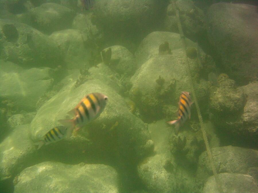 stkittsfish